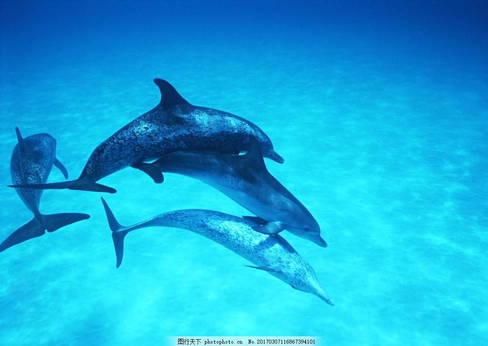 海中鲸鱼摄影 海中鲸鱼摄影图片素材 动物世界 生物世界 海底生物