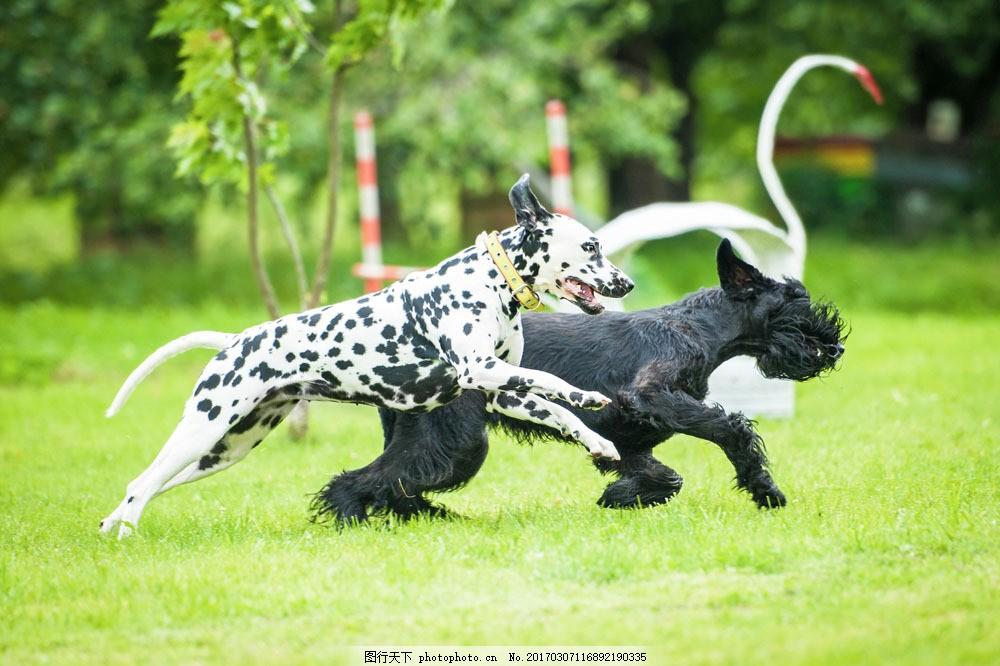 飞奔 奔跑 小狗 狗狗 可爱小狗 快乐的小狗 宠物 动物摄影 狗狗图片