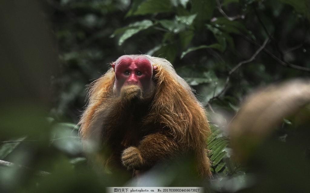 亚马逊 地球之肺 亚马逊丛林 大自然美景 摄影 生物世界 野生动物 300