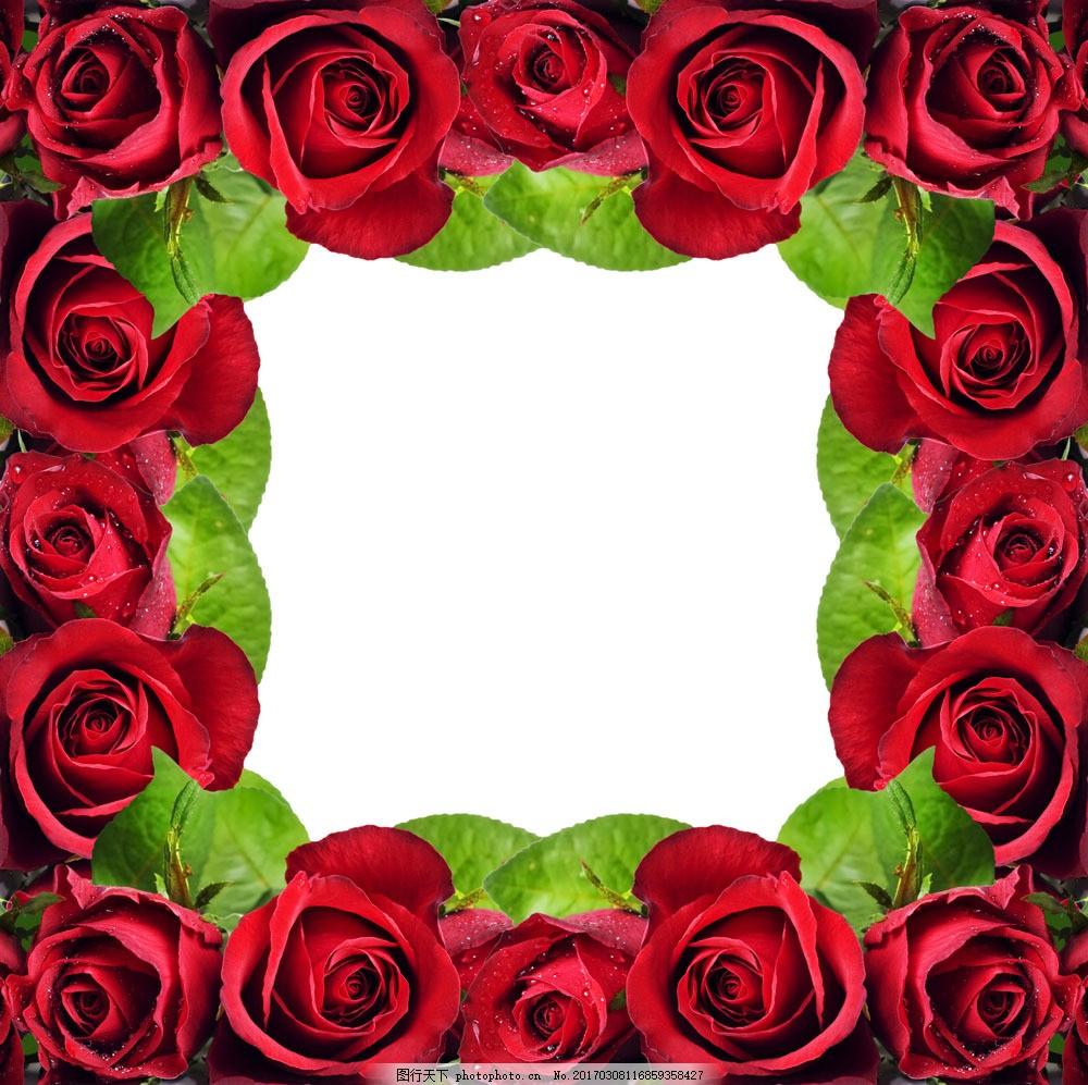 玫瑰花边框素材图片