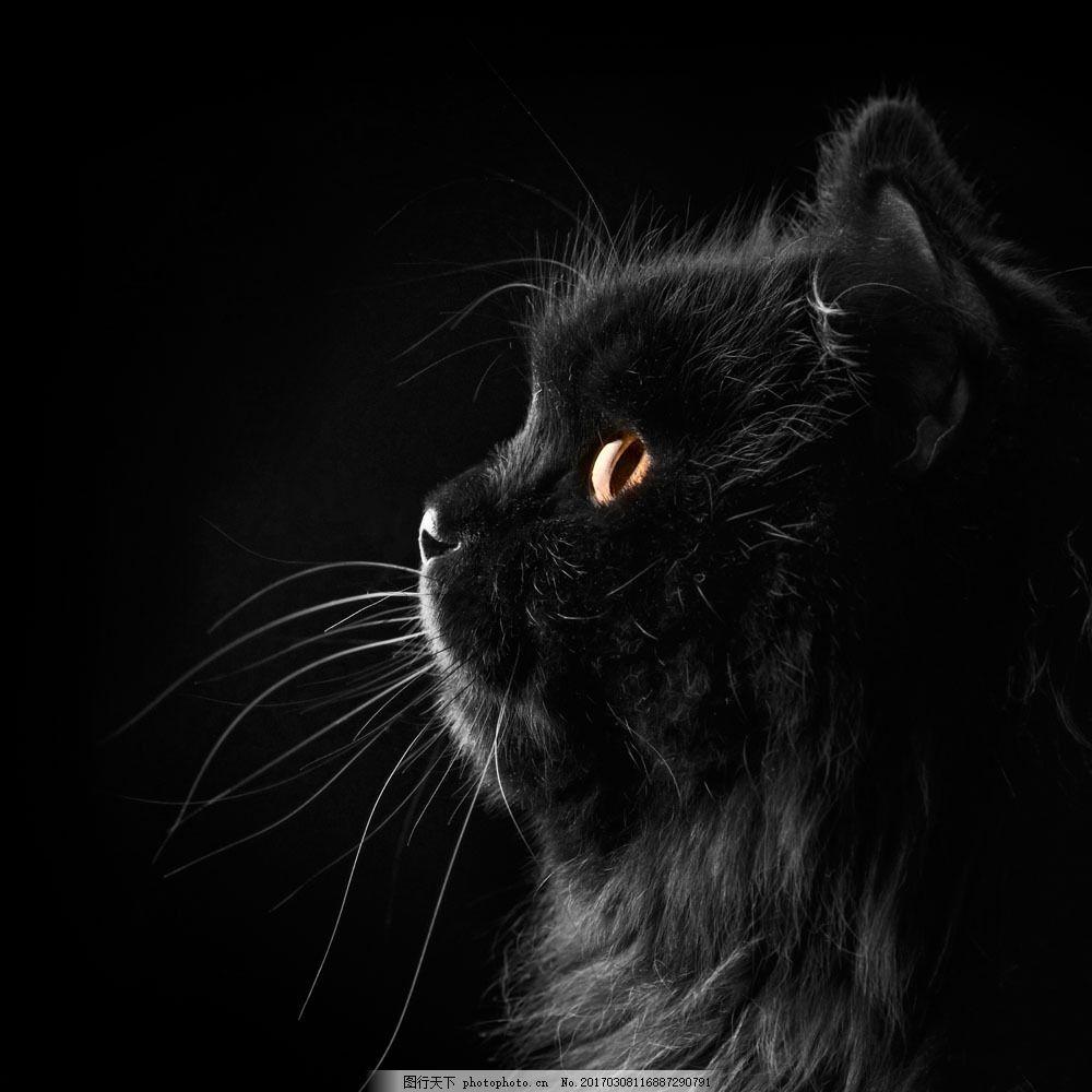 黑色猫咪摄影图片