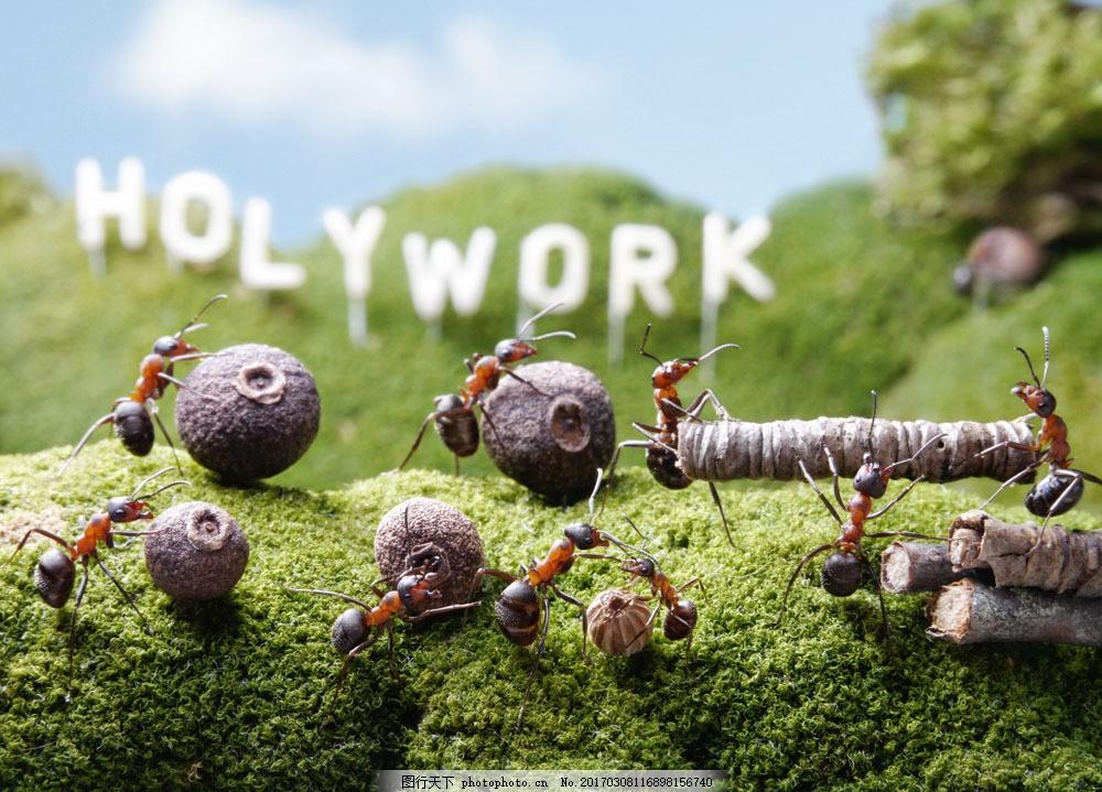 搬运食物的蚂蚁 搬运食物的蚂蚁图片素材 字母 蓝天 树干 动物