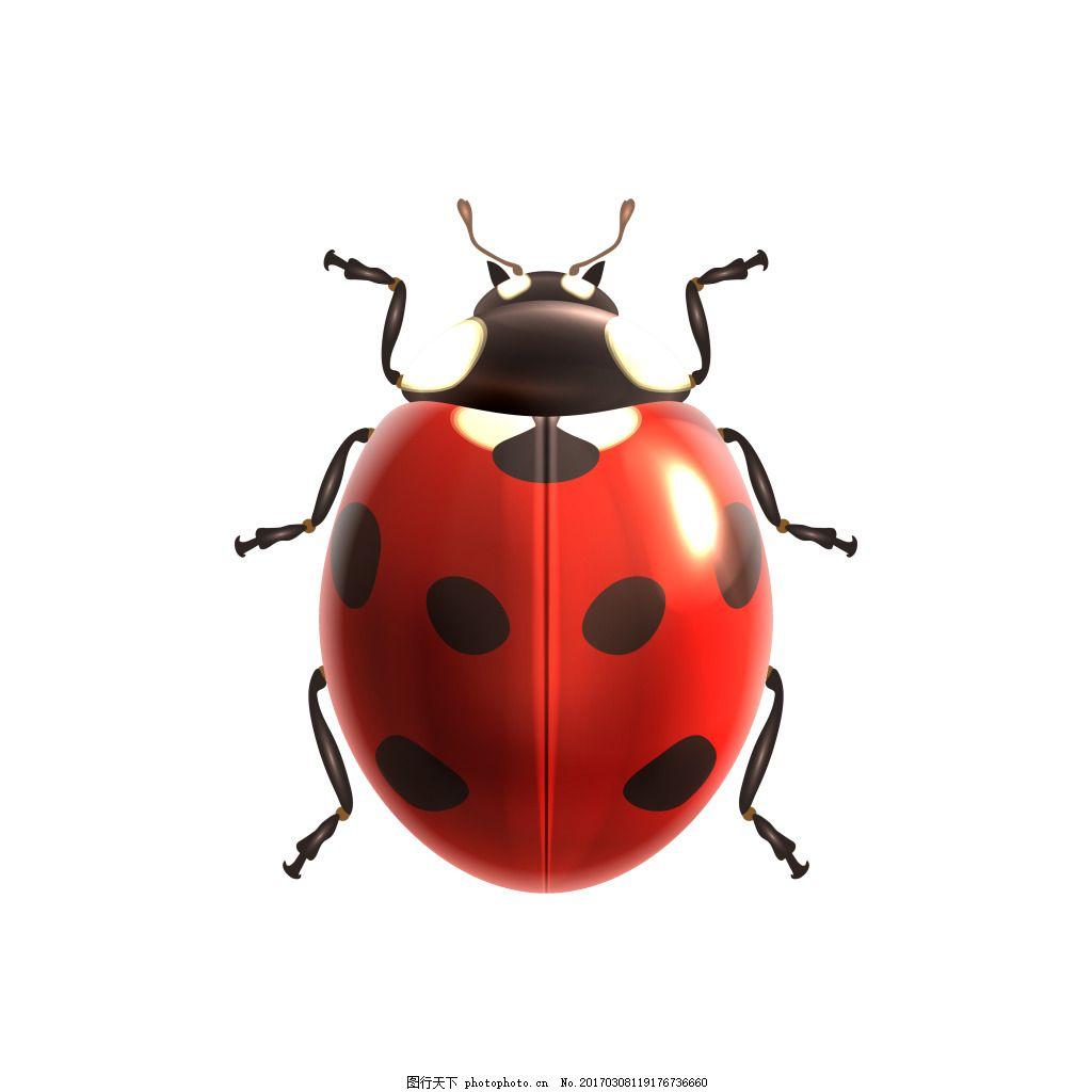 红壳七星瓢虫可爱素材 元素 设计素材 创意设计 动物 小动物 卡通
