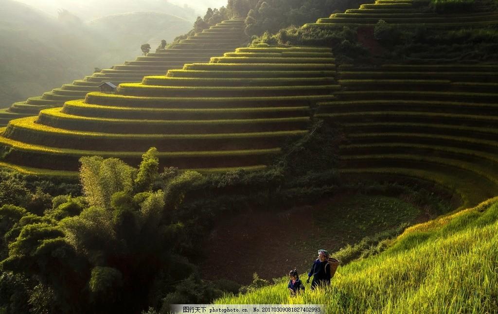 梯田 稻田 农业 风景 劳动 摄影      摄影 自然景观 田园风光 300dpi