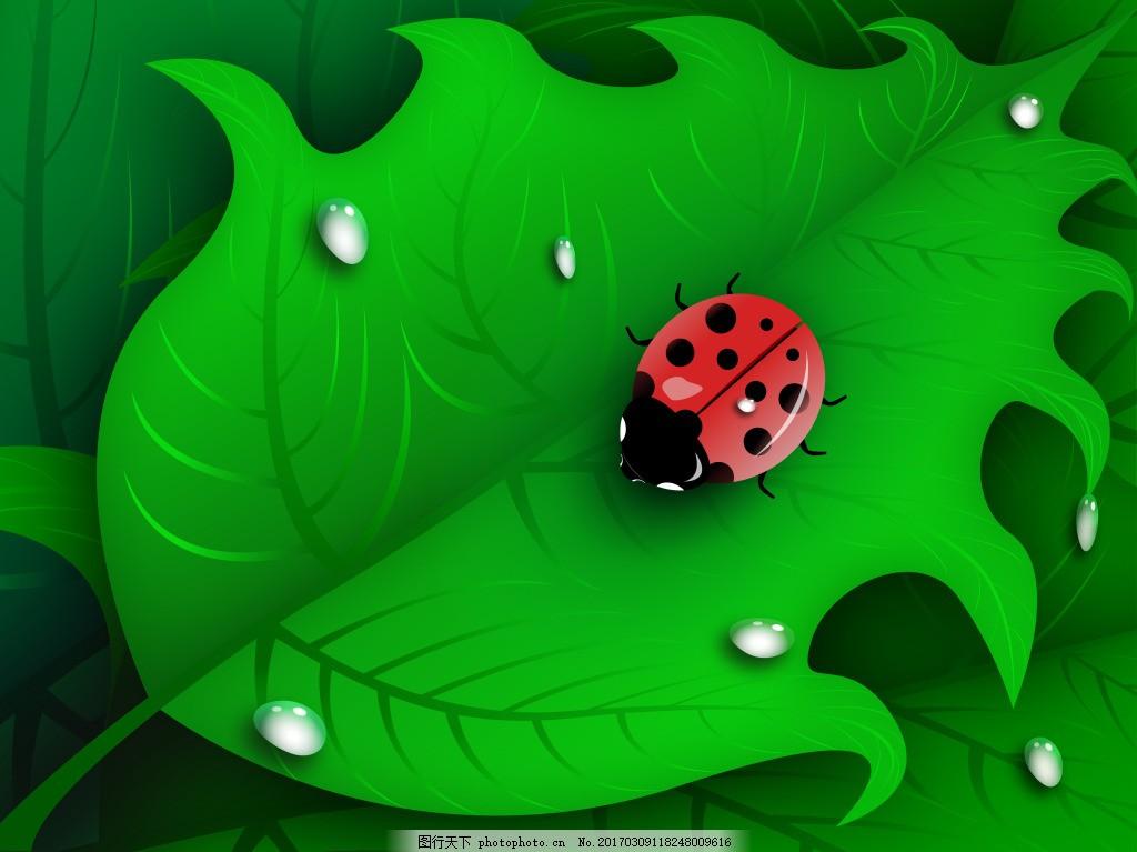 瓢虫作品 叶子 水滴 自然 大自然 七星瓢虫 树叶 昆虫 茎叶图片