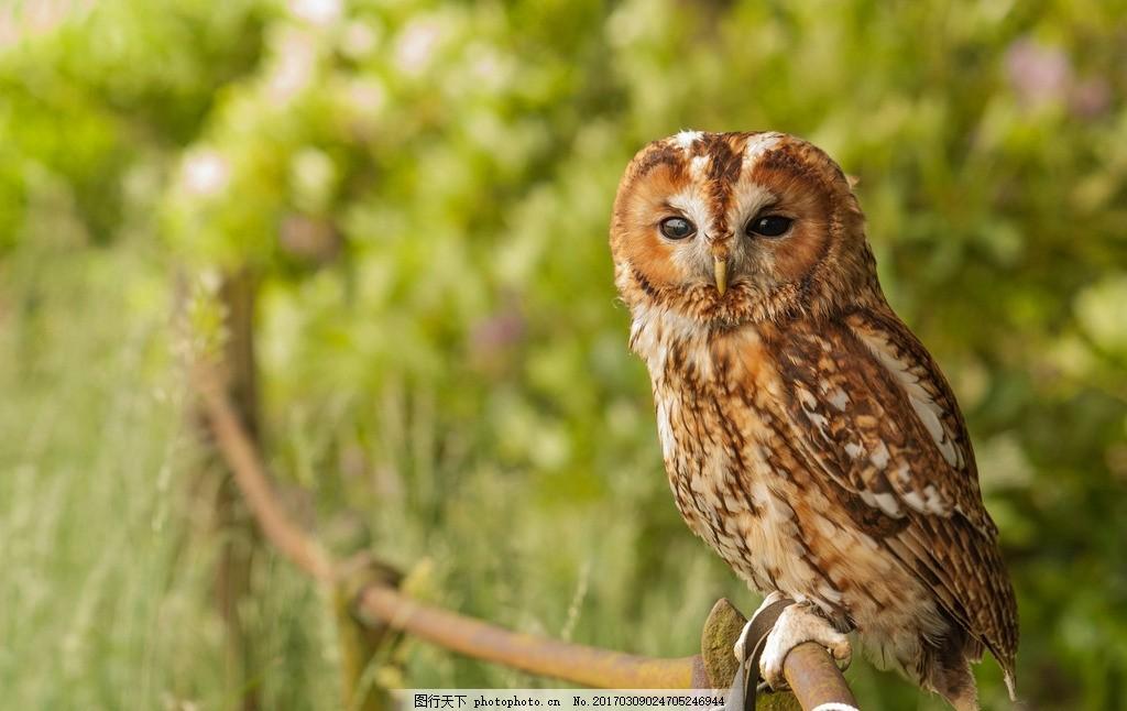 生物 动物 卵生动物 鸟类 猫头鹰 摄影 生物世界 鸟类 72dpi jpg