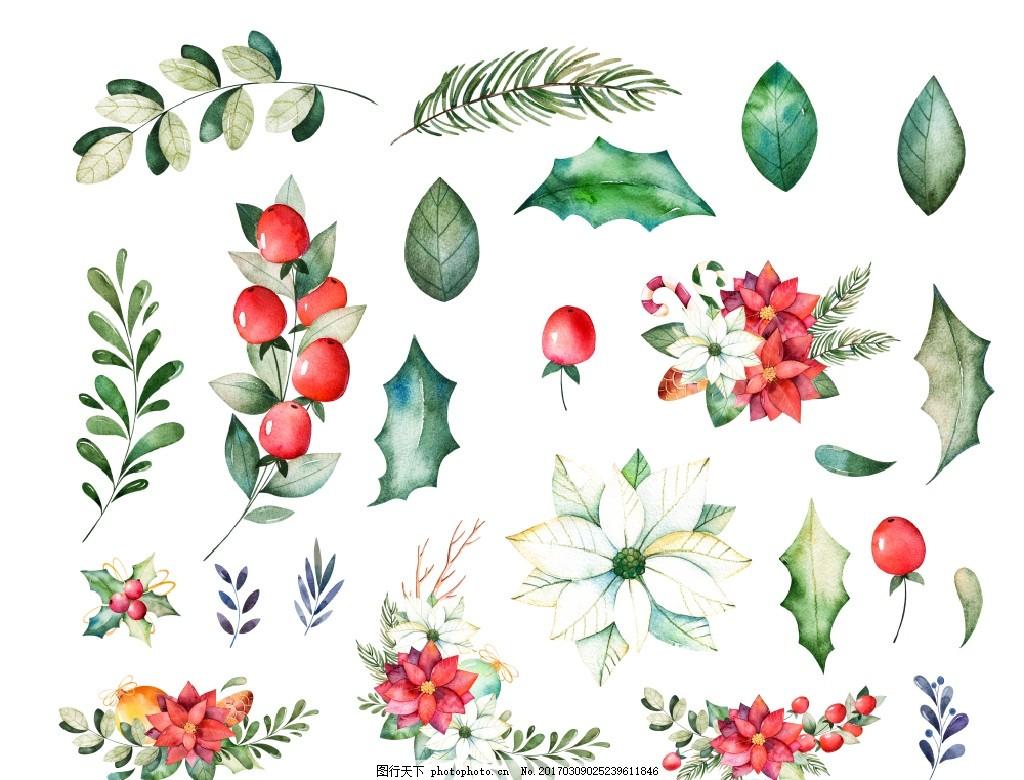 圣诞节花草植物 节庆 传统 元素 手绘 水彩 水粉 图案 淡雅