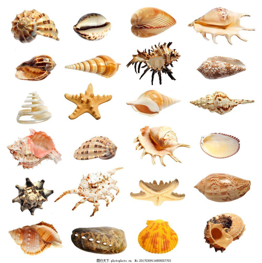 图片素材 贝壳 海螺 大海 贝壳大全 海鲜 海水 岛屿 海星 纯白 圆圈