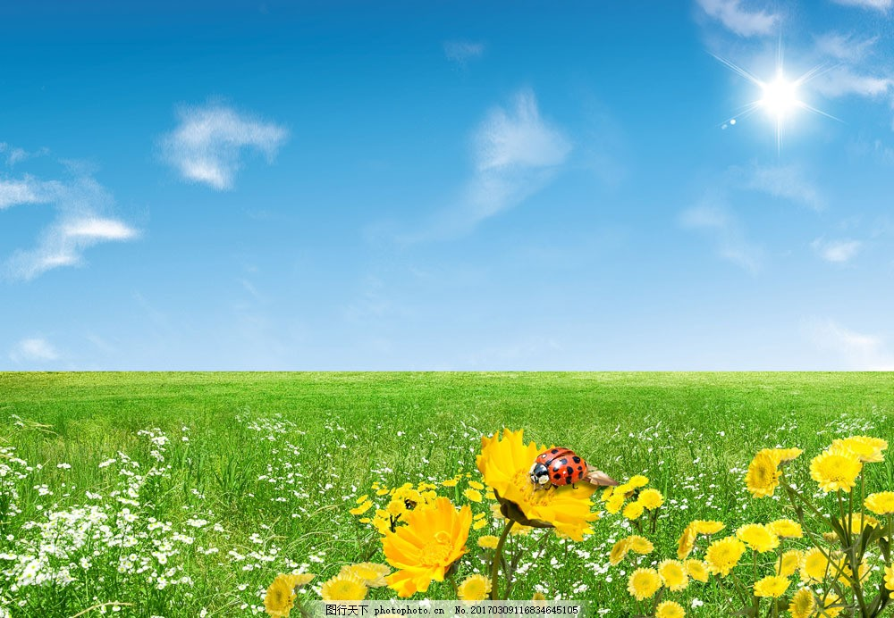 春季 美丽风景 鲜花 花朵 草地 风景摄影 蓝天白云 瓢虫 花草树木