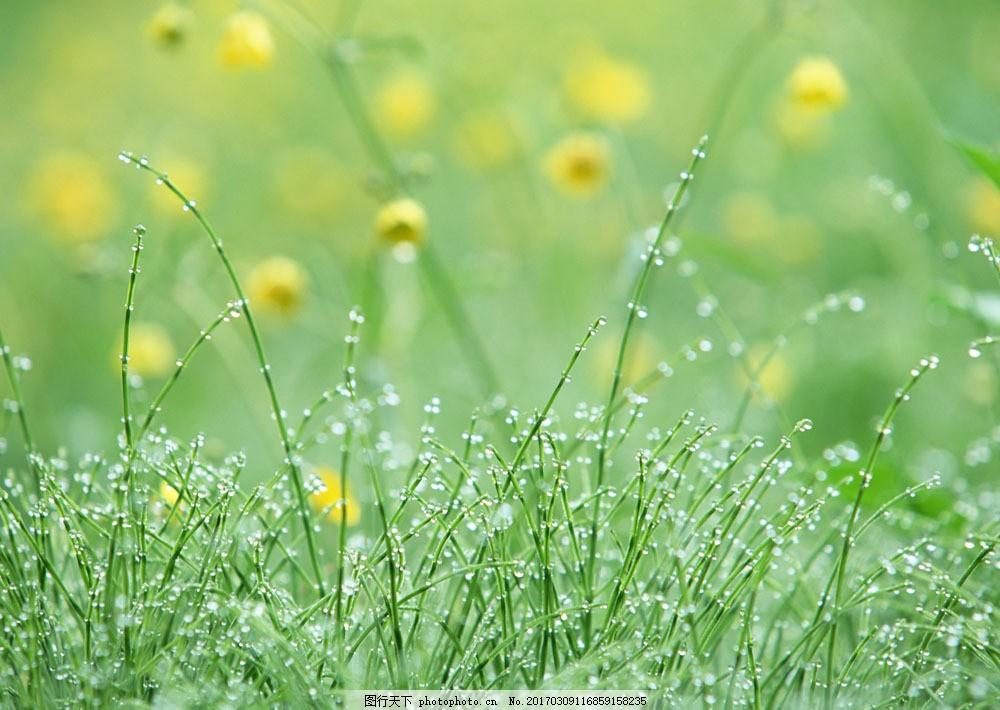 绿色清新背景素材图片素材 春天 鲜花 野花 花朵 草地 露珠 露水