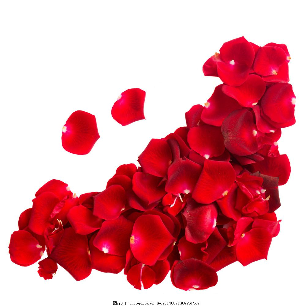 玫瑰花瓣拼凑的图案背景图片