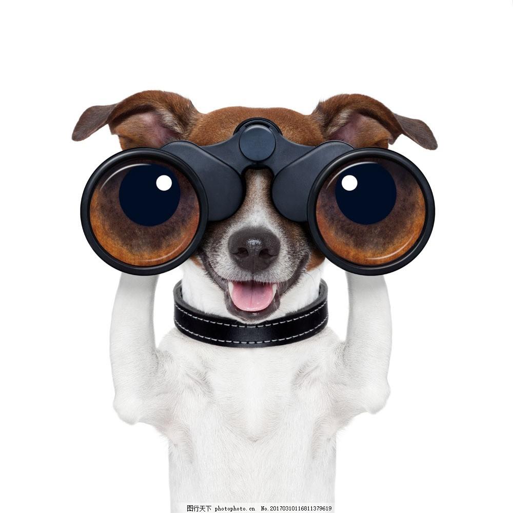 看望远镜的小狗图片素材 小狗 望远镜 宠物狗 狗狗 可爱小狗 可爱动物