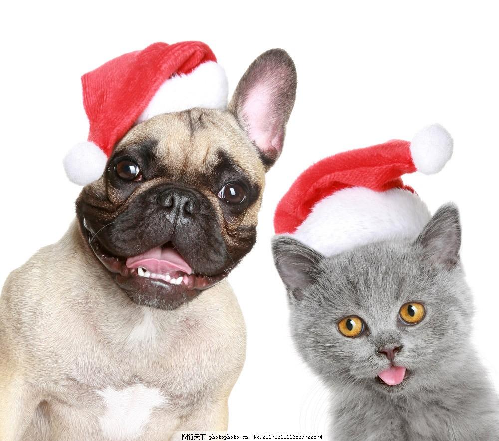 戴圣诞帽的动物图片素材 小狗 圣诞动物 戴帽子的小狗 猫咪 小猫 宠物