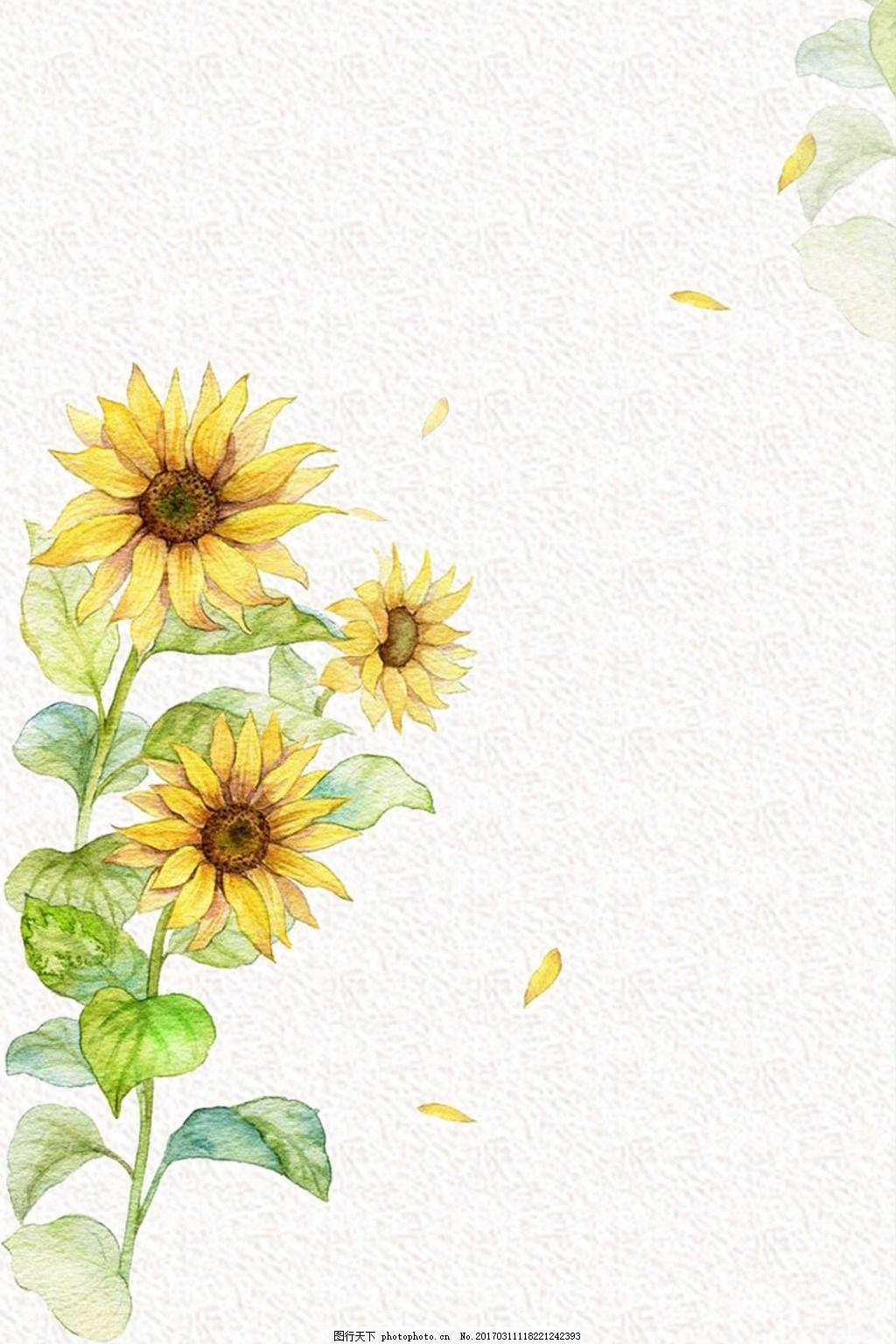 手绘向日葵 装饰花卉 花朵 插画 插画背景 插画装饰