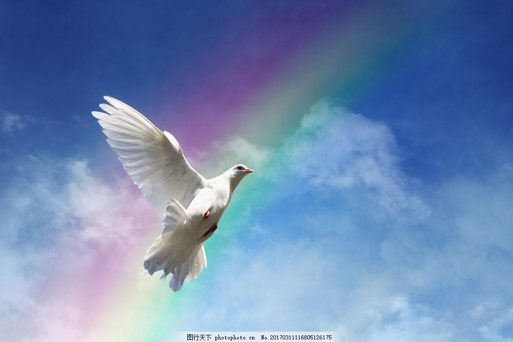展翅飞翔的鸽子图片