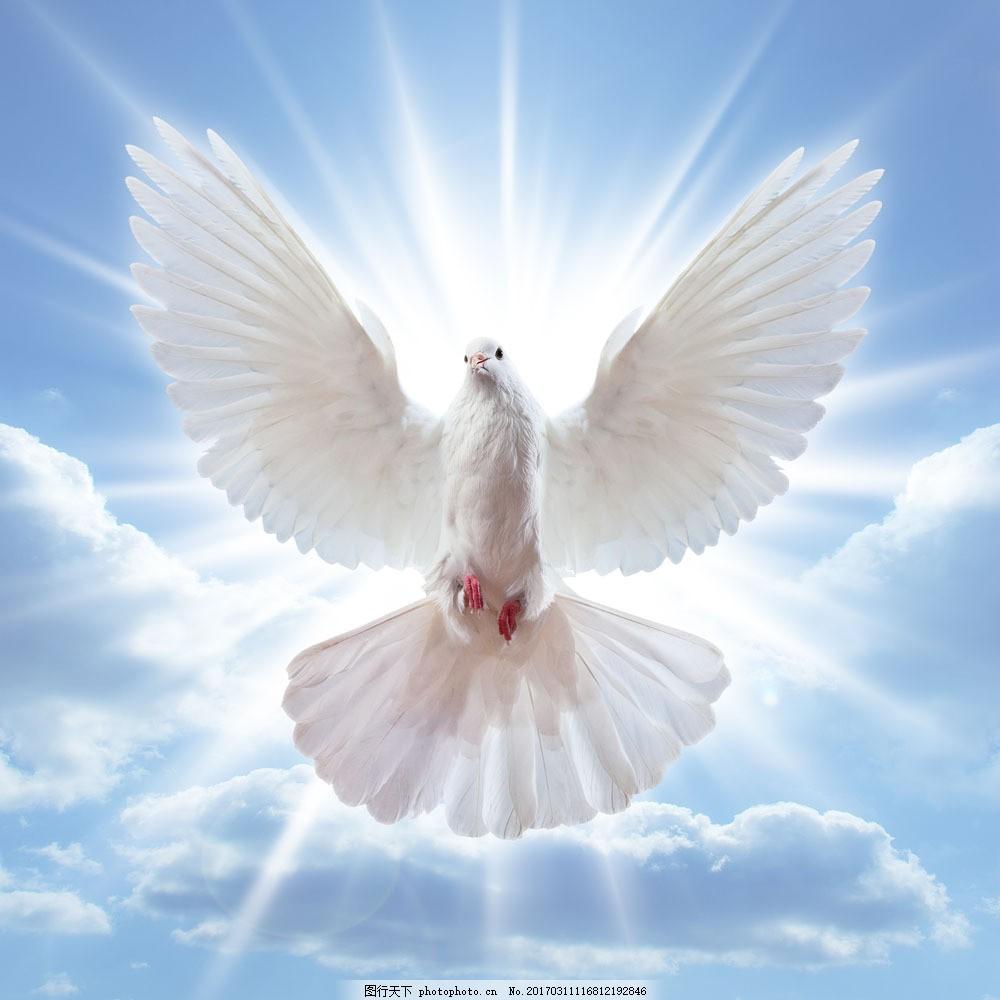 阳光与飞翔的白鸽图片