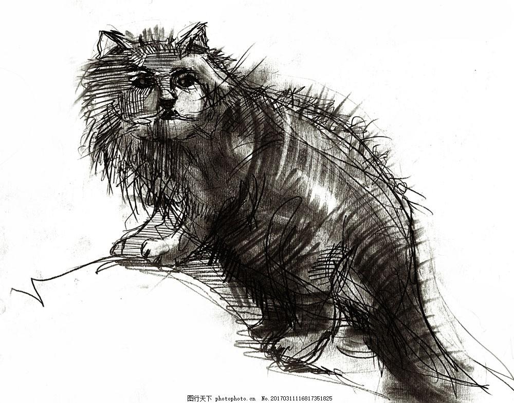 素描小猫图片素材 动物 动物世界 摄影图 素描 猫咪 小猫 绘画 猫咪