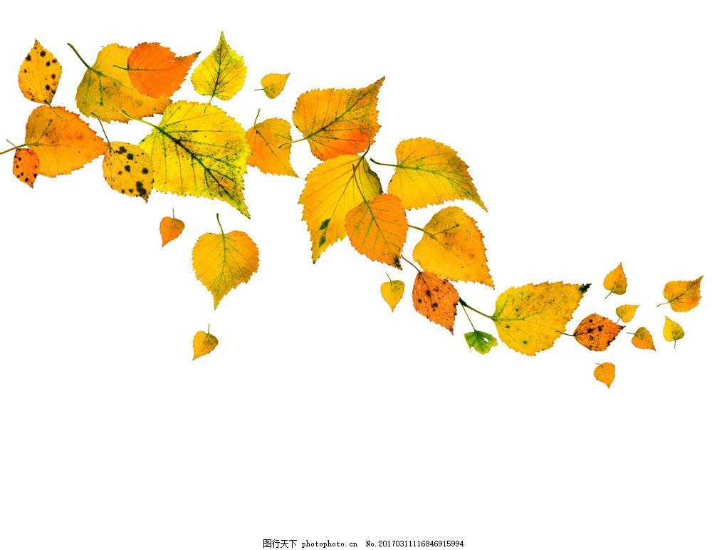 飘落的树叶图片素材 飘落的树叶 落叶 秋季树叶背景 黄叶 叶子 秋天