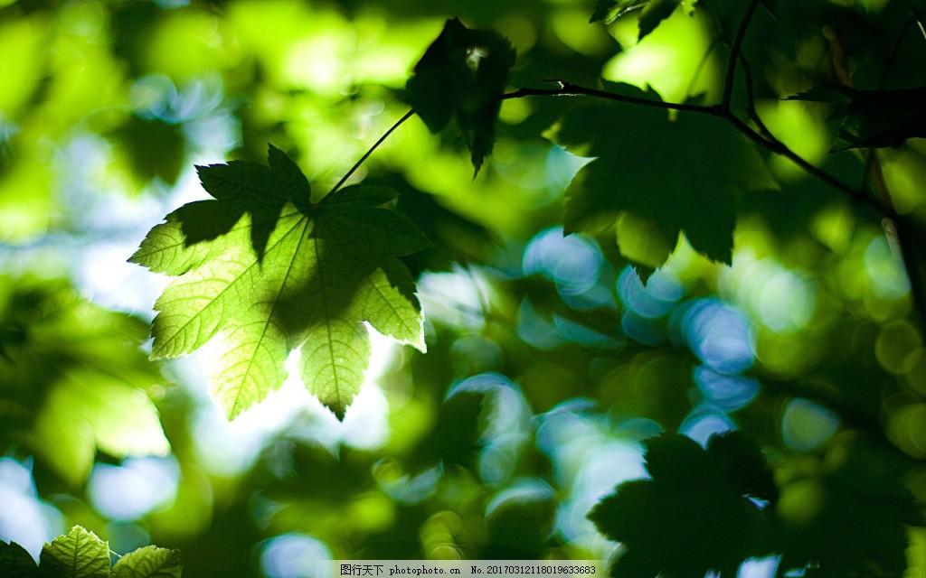 绿色叶子背景 叶子 树叶 绿色 春天 环境 阳光
