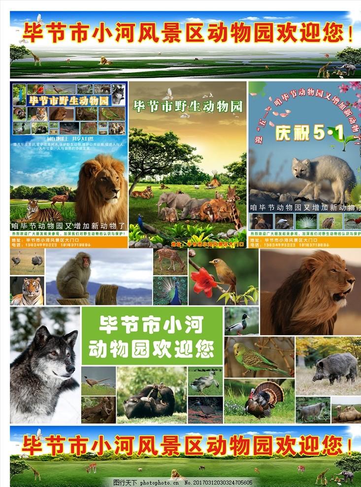 动物园 野生动物园 动物 景区 毕节 设计包 设计 广告设计 展板模板 3
