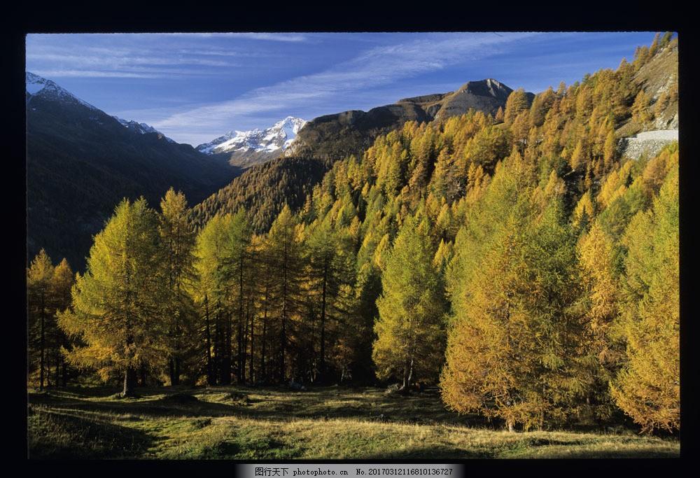 秋天树林雪花风景图片