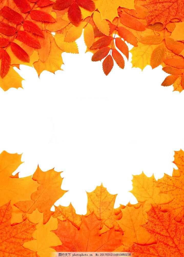 秋天树叶边框背景图片