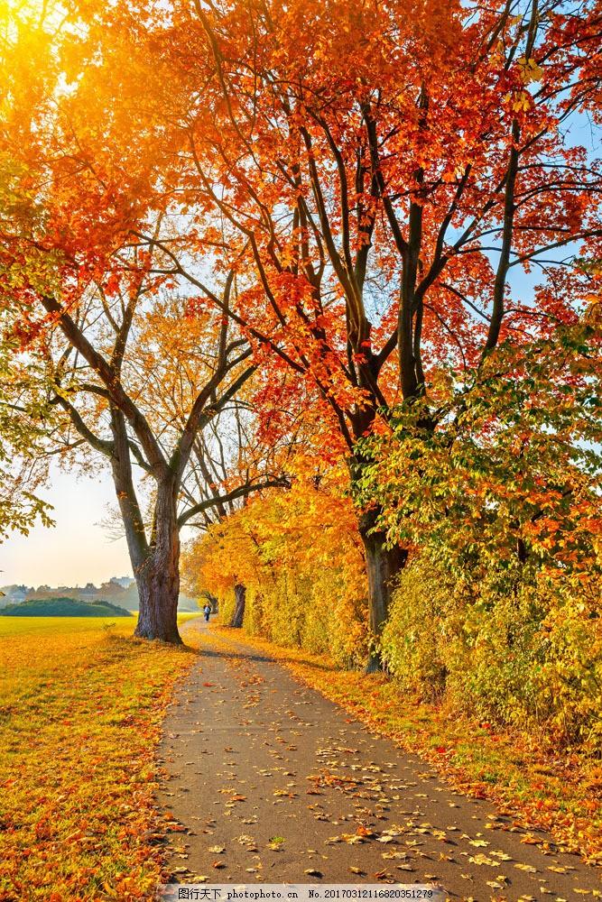 美丽秋天树木道路风景图片
