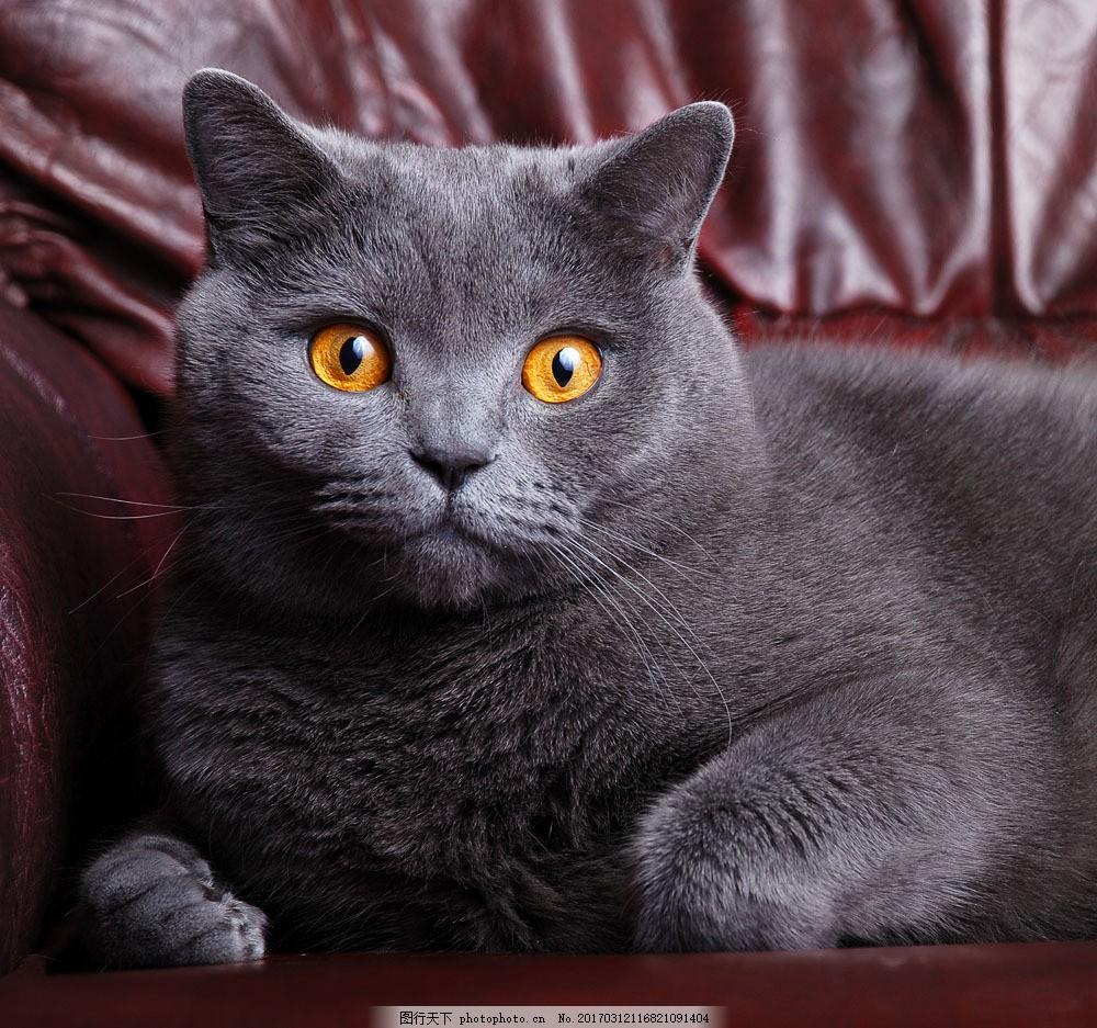 黑猫图片素材 可爱 猫 小猫 猫咪 宠物 动物世界 动物摄影 黑猫 猫咪