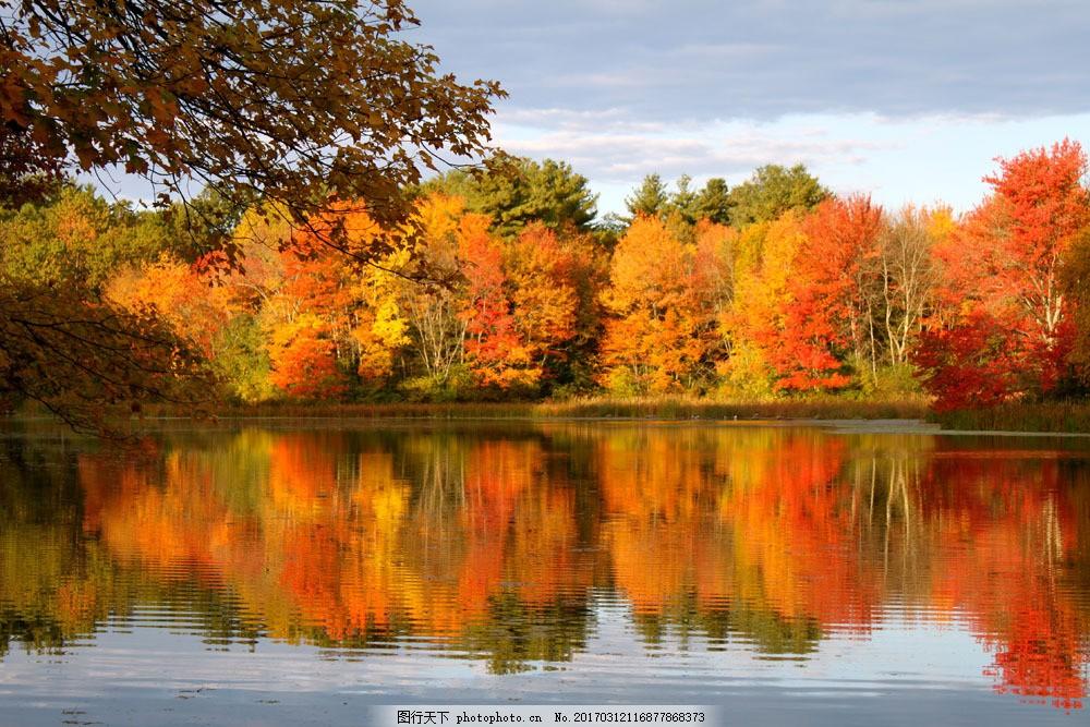 秋季景观摄影图片 秋季景观摄影图片图片素材 秋天风景 枫叶 红枫叶