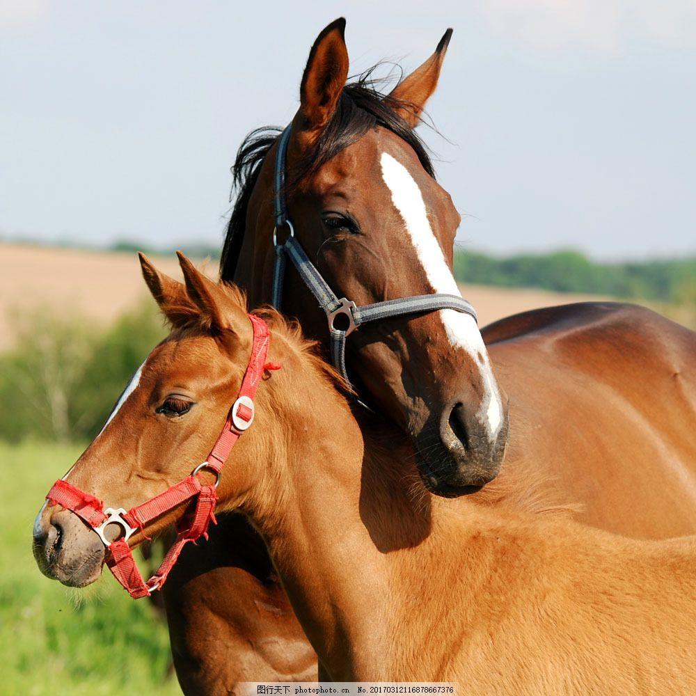 两只马 两只马图片素材 动物 生物 陆地动物 生物世界