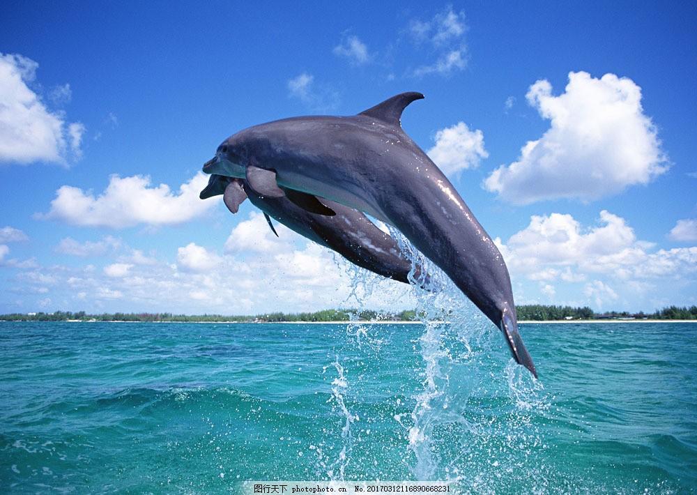 跳跃的海豚 跳跃的海豚图片素材 动物世界 生物世界 海底生物 海洋