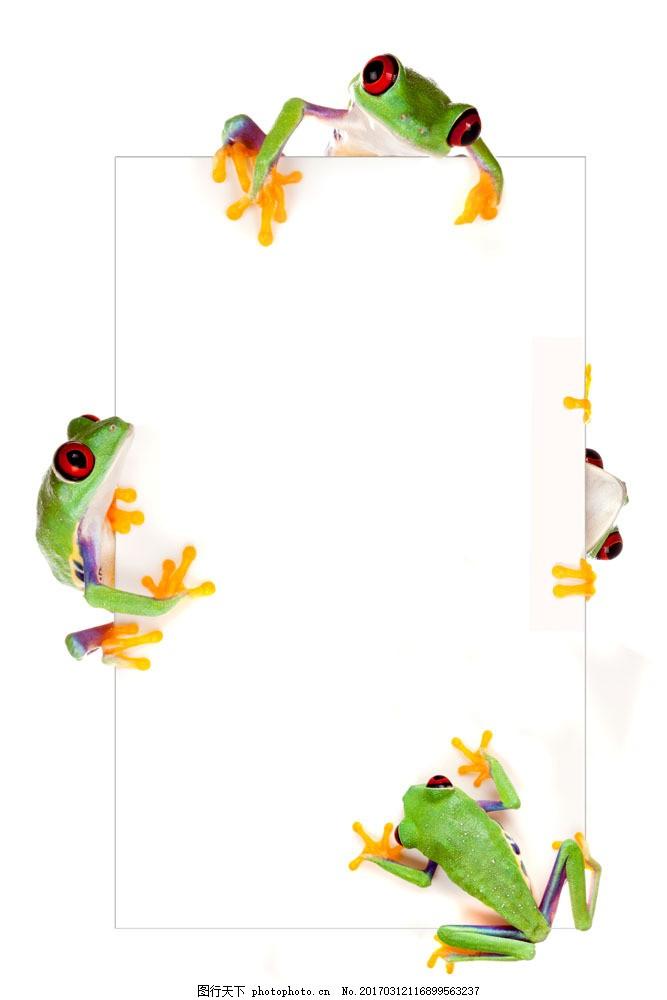 动物 空白 广告牌 卡片 青蛙 展示 创意 设计图 广告模板 高清图片 图