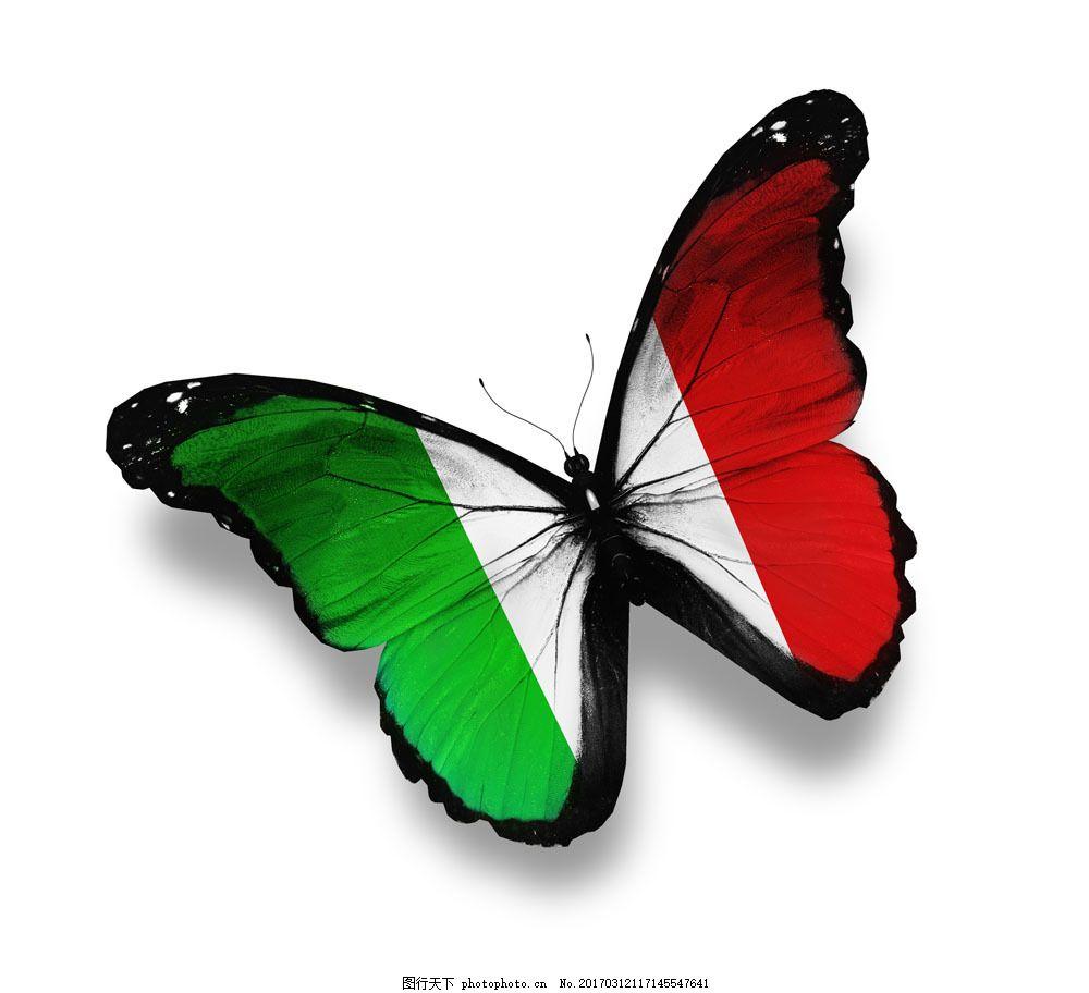 意大利国旗蝴蝶 意大利国旗蝴蝶图片素材 美丽蝴蝶 漂亮蝴蝶 昆虫动物