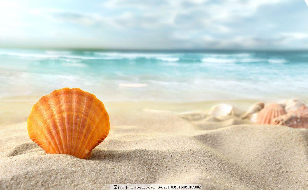 海滩上的贝壳图片素材 贝壳 扇贝 美丽海滩风景 沙滩风景 水中生物