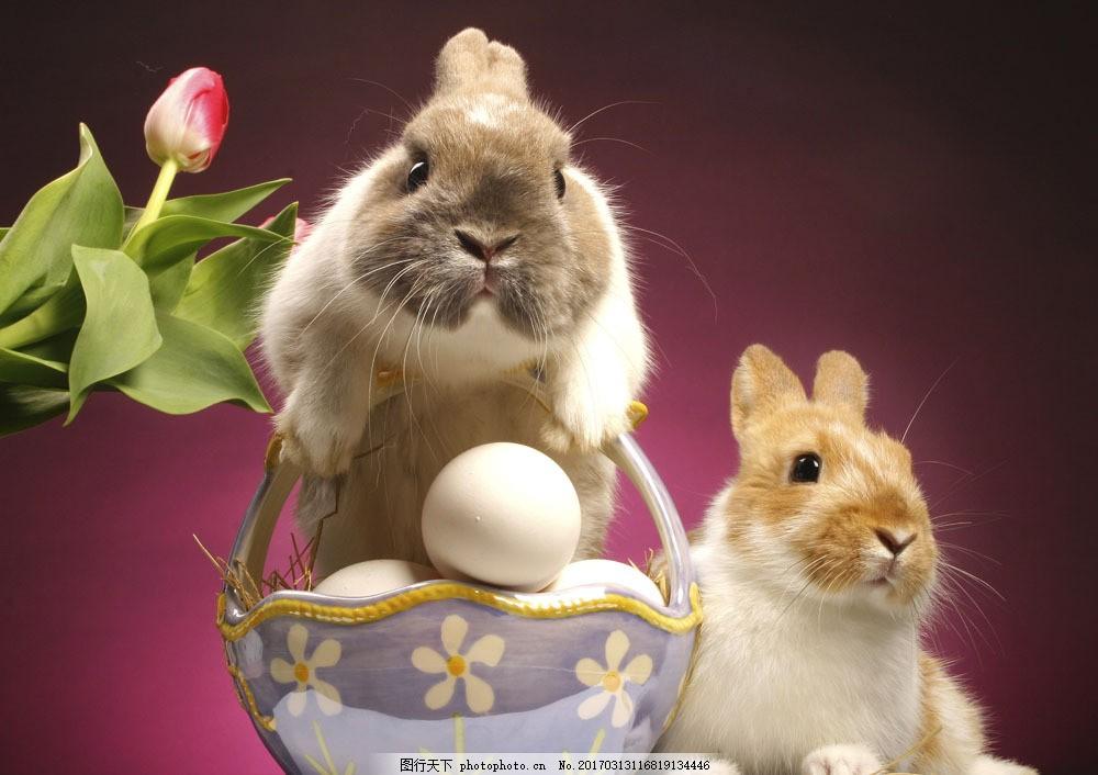 动物 兔子 可爱 萌 篮子 鸡蛋 复活节鸡蛋 鲜花 站立 趴着 陆地动物