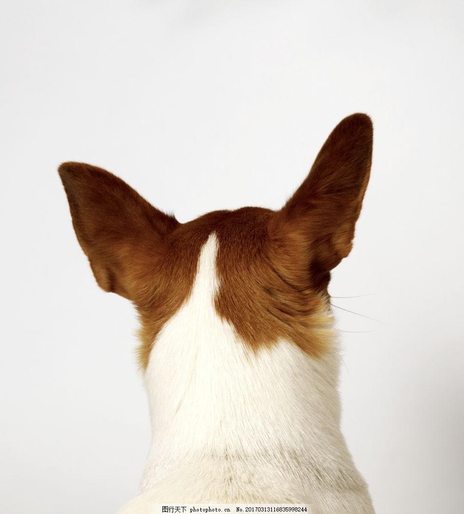 犬科动物 犬科动物图片素材 狗 小狗 宠物狗 小狗素材 小狗摄影