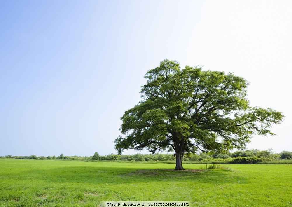 草原上的一棵大树图片素材 草原风光 草原 蓝天 白云 湿地 自然风景 自然景观 摄影 高清图片 图片素材 草地 绿色 JPG图片 草原主题 大自然 春天 生机盎然 碧绿的草地 森林图片 风景图片 风景画 林木风景 草坪 大树特写 花草树木 生物世界 图片素材