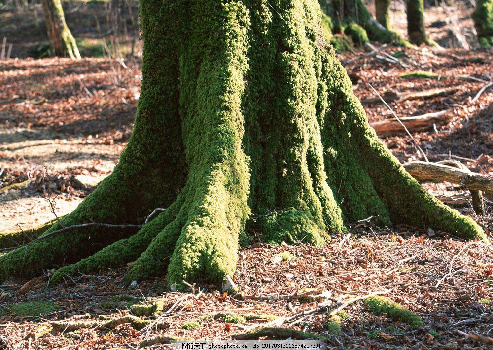 大树树根图片素材 自然 风景 树根 树林 森林 大树 阳光 盘根错节