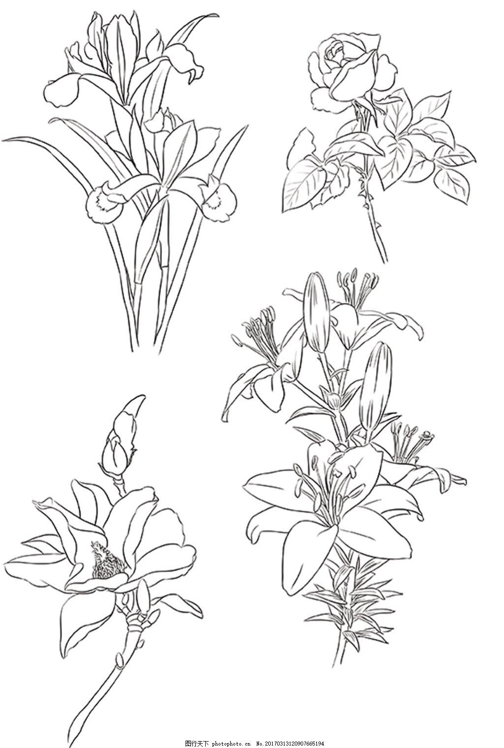 植物 花卉手绘