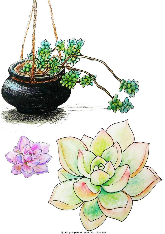 彩铅多肉 共享 卡通 植物 插画 元素 绿色 春天 清新