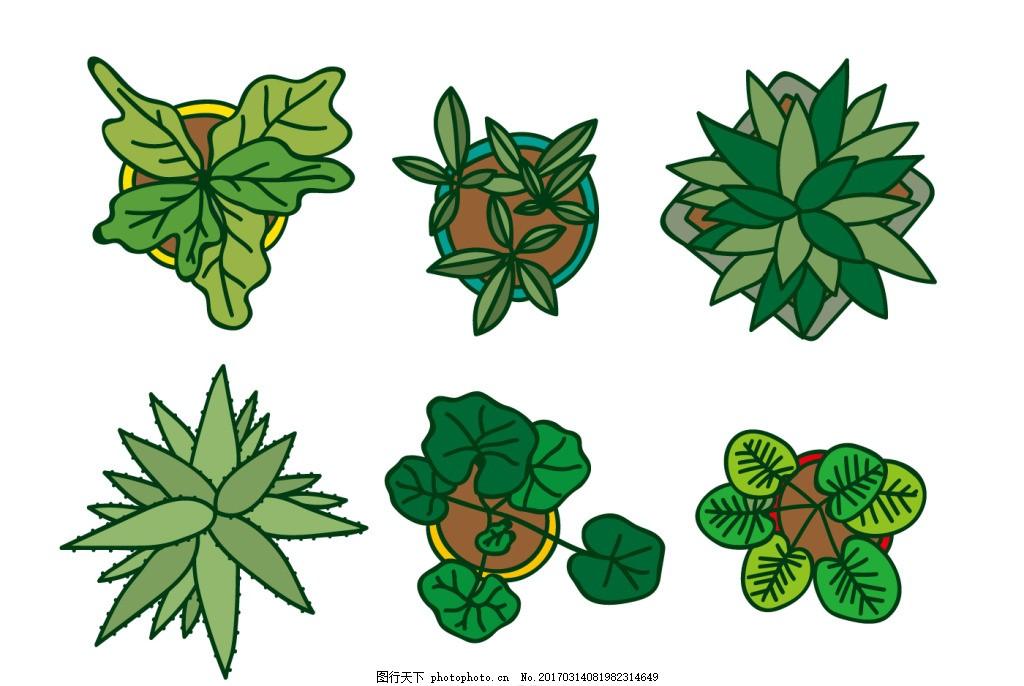 手绘植物顶视图