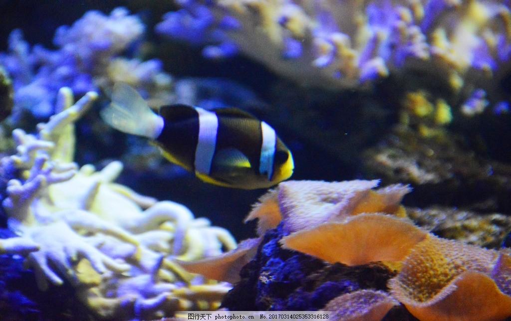 海洋馆 珊瑚 热带鱼 可爱 海底世界 生物 自然 高清 壁纸 桌面 屏保