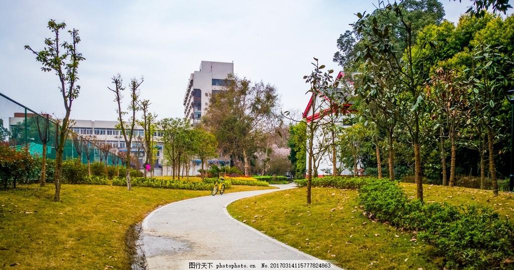 校园里的春天 四川大学 望江校区 春天 植物 手机照片 摄影 自然景观