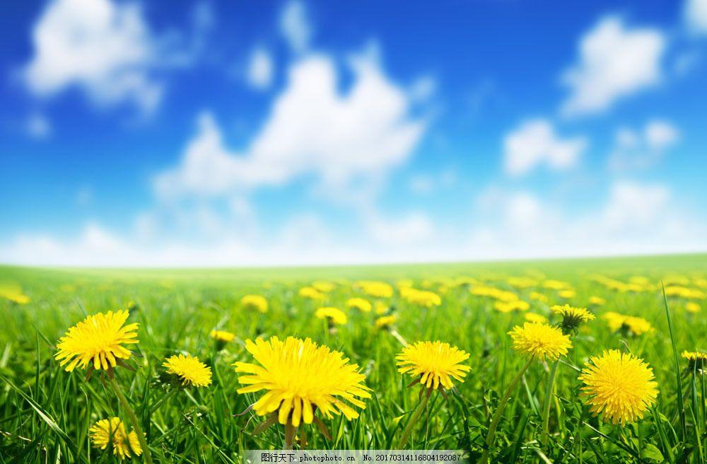 黄色鲜花与蓝天白云图片素材 鲜花草地 美丽花卉 黄色鲜花 美丽花朵