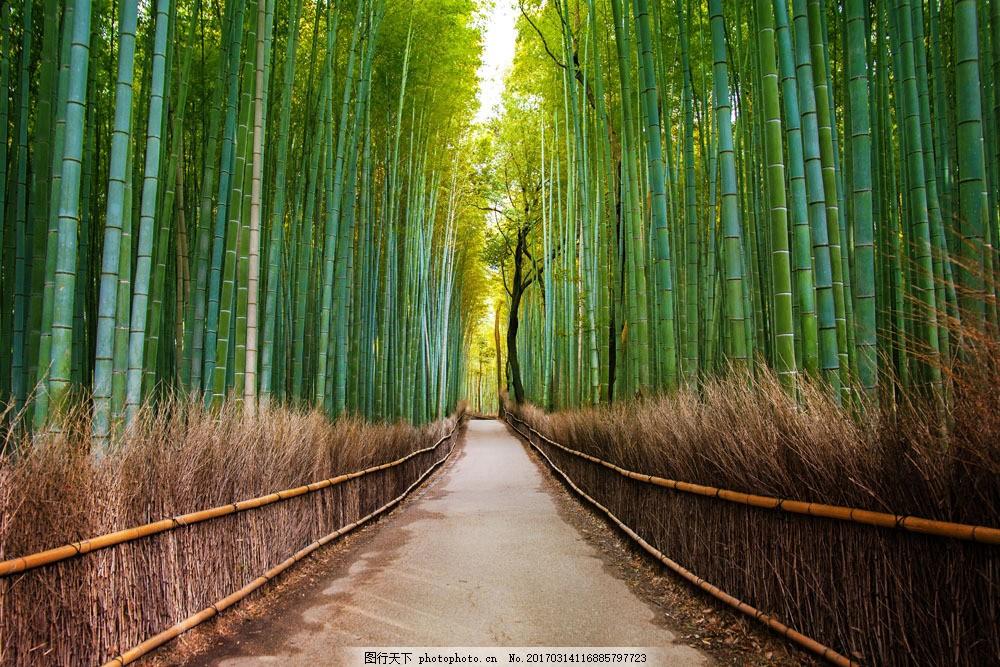竹林道路风景 竹林道路风景图片素材 绿竹背景 竹林风景 小路 竹子
