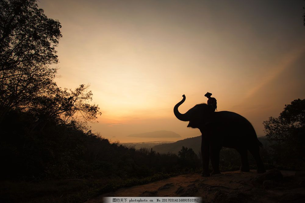 大象与人物剪影 大象与人物剪影图片素材 骑象的人 大象摄影 动物摄影