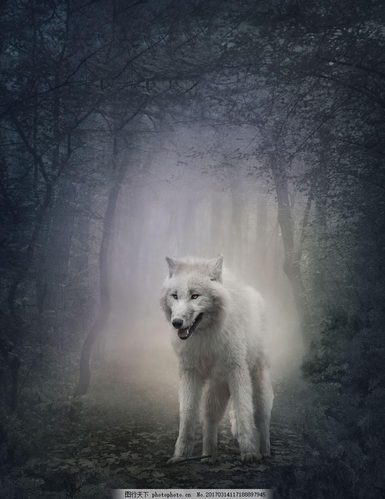 树林里的狼 树林里的狼图片素材 动物 树木 其他类别
