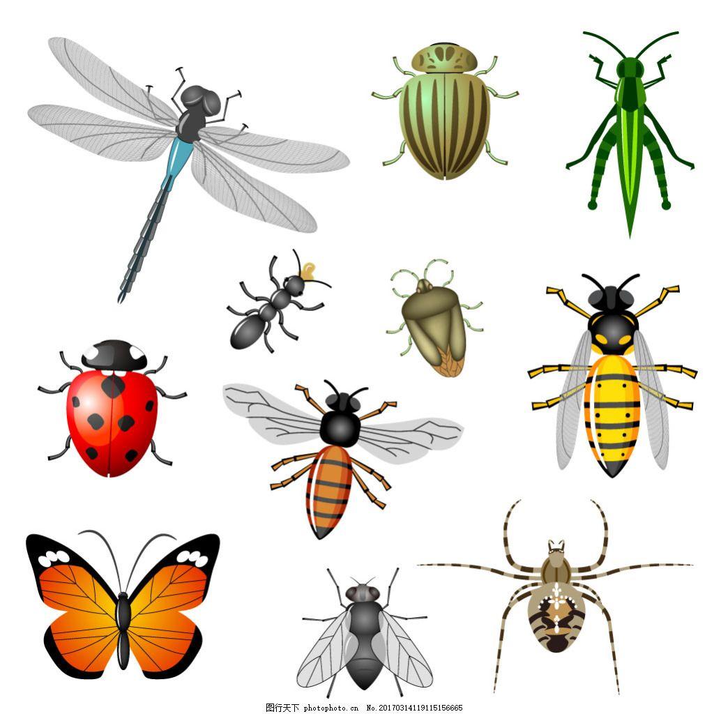 多种昆虫手绘图蝴蝶蜻蜓