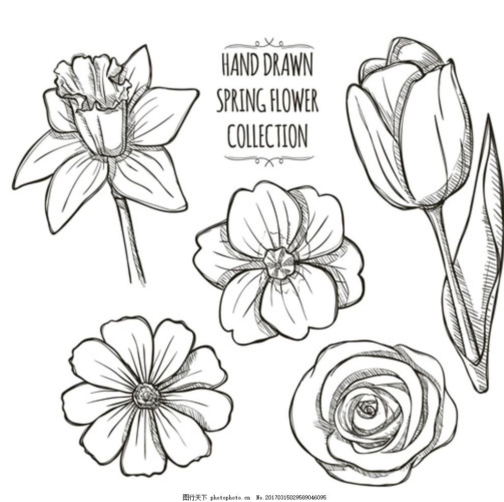 手绘线稿春季花朵花卉