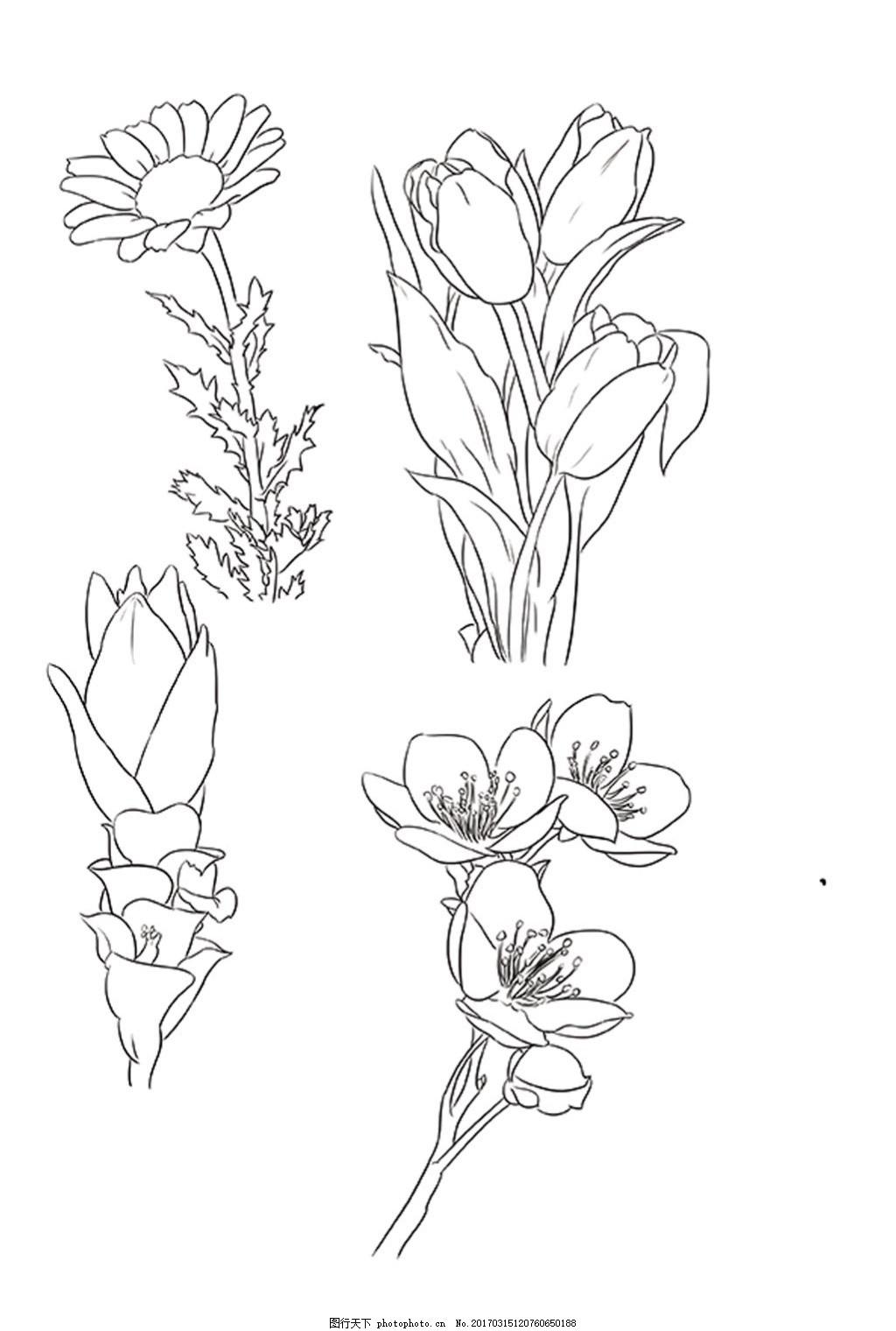植物花卉手绘